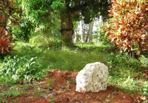 Pito Oromana, le nombril de Rimatara