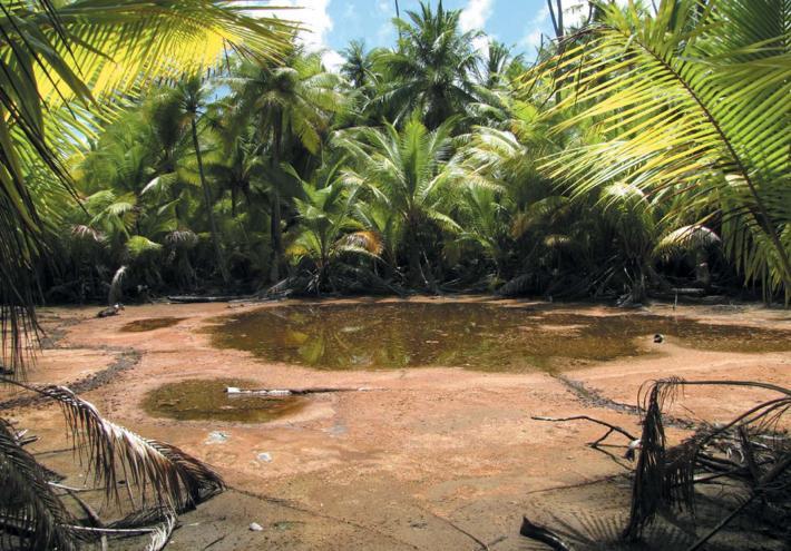 © Tahiti Héritage, Jean-François BUTAUD